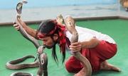 Nghệ sĩ Thái Lan trổ tài điều khiển rắn độc tại Nha Trang