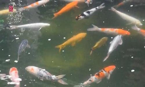 Khu du lịch sinh thái cá cảnh 150 tỉ đồng ở ngoại ô Sài Gòn