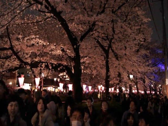 Dòng sông hoa anh đào ở Tokyo