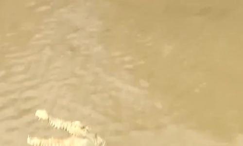 Khúc sông bỗng hút khách nhờ cá sấu 'bạch tạng'