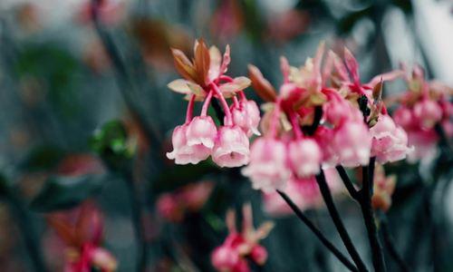 Muôn hoa đua nở tại lễ hội hoa Bà Nà Hills Đà Nẵng - ảnh 11