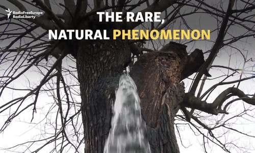 Giải mã hiện tượng cây biết 'đi tiểu' ở Montenegro