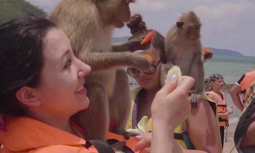 Đảo khỉ đuôi dài hút khách ở Thái Lan