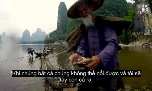 Nghệ thuật đánh cá bằng chim cốc ở bên dòng Lệ Giang