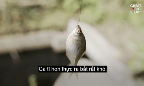 Nghệ thuật bắt cá nhỏ như móng tay ở Nhật 200 năm trước