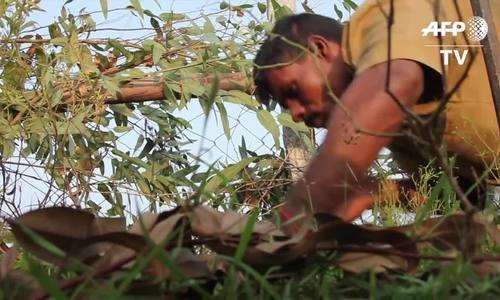Bí ẩn về bộ tộc người rắn ở Ấn Độ