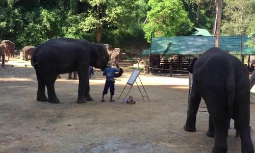 Đàn voi biết vẽ tranh để kiếm sống ở Thái Lan - ảnh 25