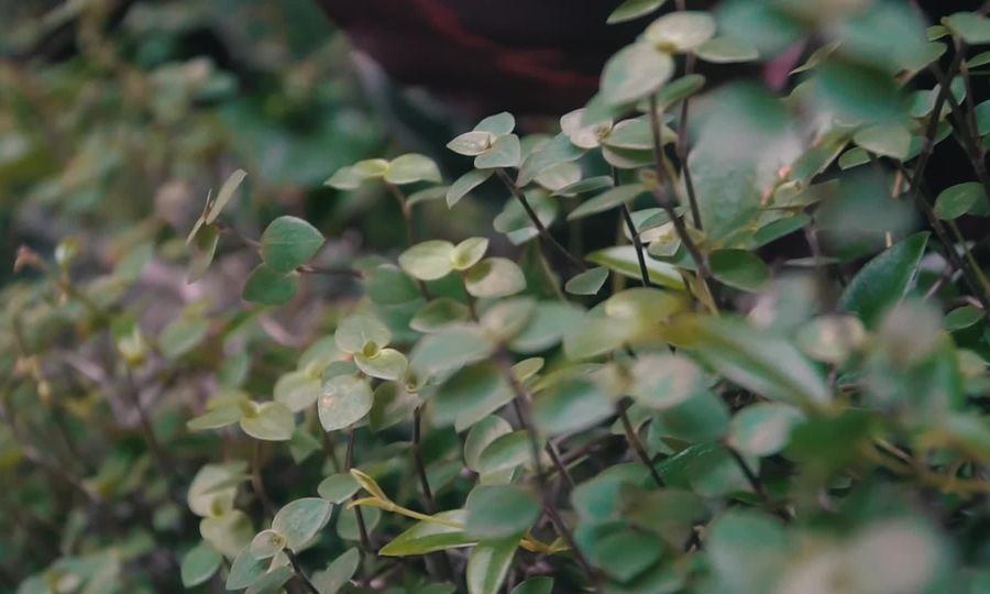 Quán cà phê như một khu vườn thu nhỏ ở Đà Lạt