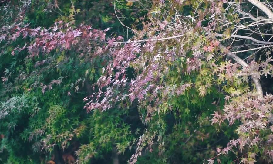 Mùa thu ở Nhât Bản