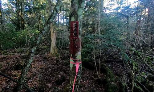 Khách Việt liều mình khám phá khu rừng tự sát ở Nhật Bản