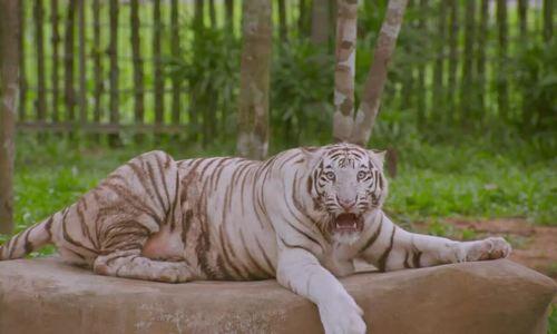 Khẩu phần ăn của động vật bán hoang dã ở Phú Quốc - ảnh 29