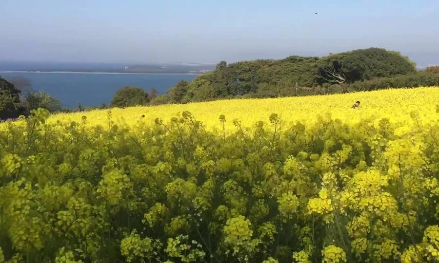 Hòn đảo trồng hoa quanh năm để hút khách du lịch