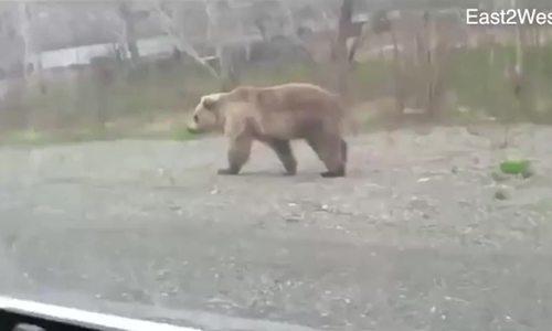 Khách nam bỏ chạy thục mạng sau khi trêu tức gấu ở Nga