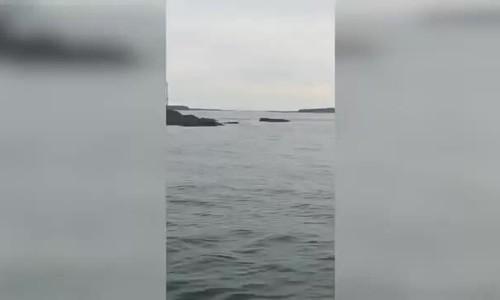 Khách la hét trước cảnh cá mập săn mồi