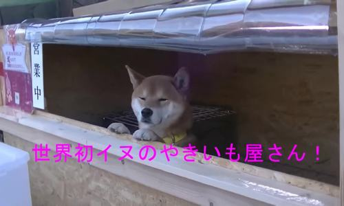 Chú chó bán khoai lang nướng ở Nhật Bản - ảnh 2
