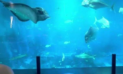 Nơi du khách ăn tối cùng 400.000 sinh vật biển - ảnh 1