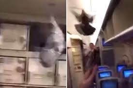Bồ câu mắc kẹt trong cabin máy bay - ảnh 1
