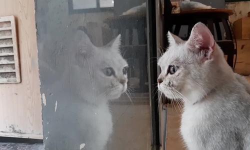 Quán cà phê những người yêu mèo không thể bỏ lỡ - ảnh 1