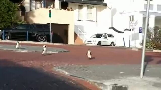 Động vật 'chiếm đóng' thành phố