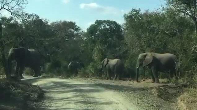 Đàn voi hàng năm viếng mộ ân nhân
