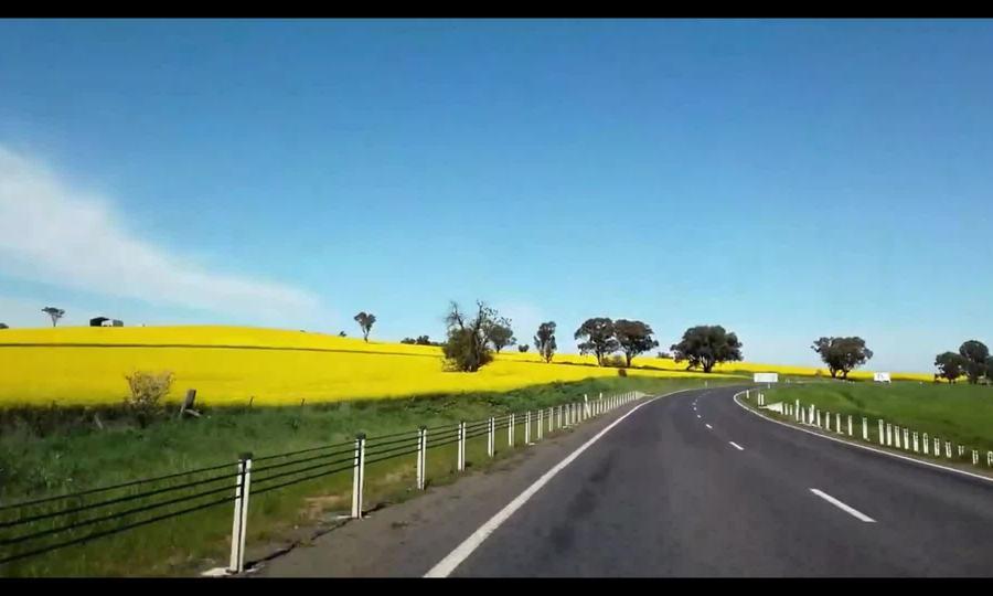 Mùa hoa cải dầu ở Australia
