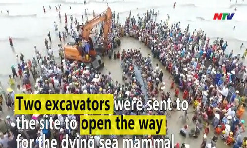 Hundreds of people heave whale back into the sea in Nghe An