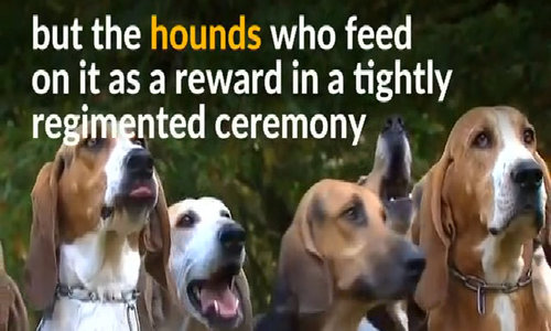 Horseback hunting with hounds for France's rich