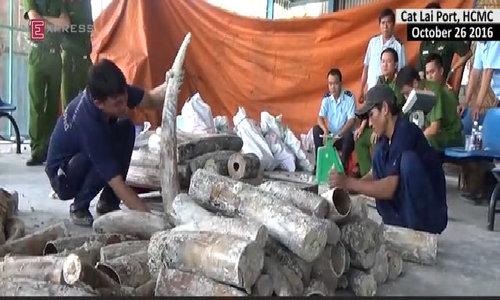 HCMC seizes over a hundred African elephant tusks