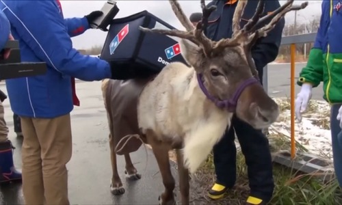 Reindeers audition for pizza delivery job in Japan