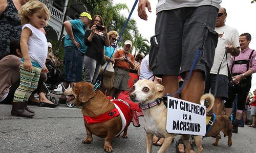 Thousands watch annual Key West Dachshund Walk