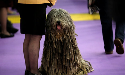 Pooches show their best side at Westminster