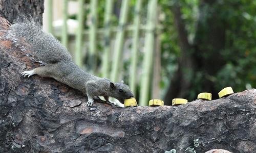 Lone woman spends two decades feeding Saigon's squirrels