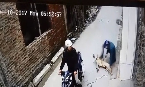 Two dog thieves nabbed for stealing 9 dogs in central Vietnam