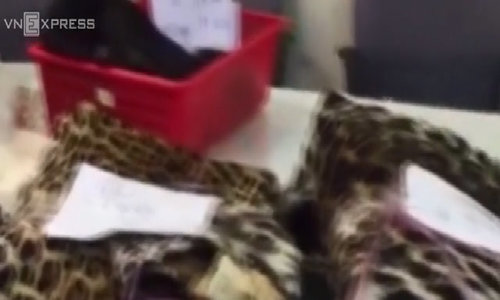 Vietnamese granny detained at Tan Son Nhat airport over smuggling puma skin and elephant parts