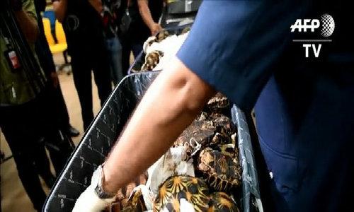 Malaysia seizes smuggled tortoises worth 0,000