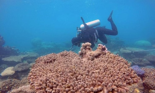 Red Sea's coral reef could be key in saving dying reefs- research