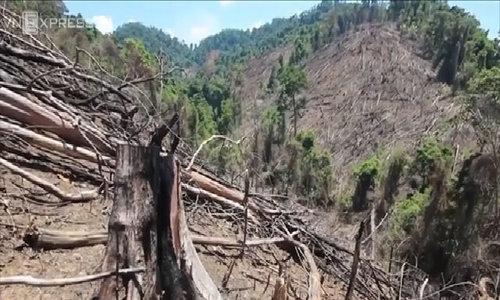 Deforestation alert in central Vietnam as locals expand their farmland