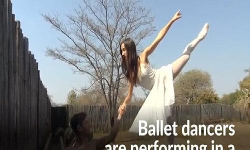 Ballet in South African bush to raise awareness of rhino poaching