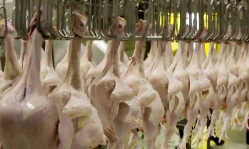Tracing your chicken from farm to plate in Saigon