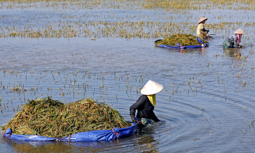 Deadly floods and their costly toll on food security in Vietnam