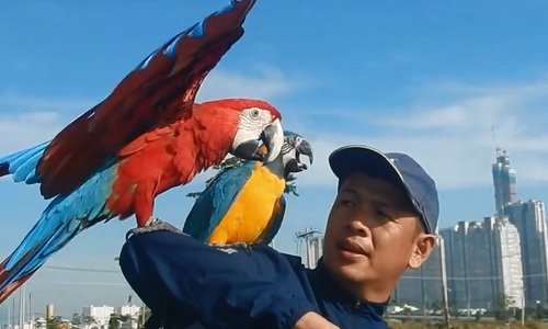 Raising parrots in the middle of Saigon's urban jungle