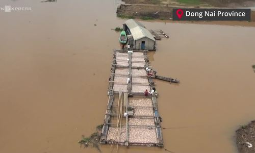Toxic gas found as 1,500 tons of farmed fish die in Vietnamese river