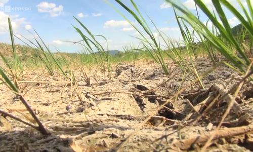 Heat wave damages rice fields in north central Vietnam