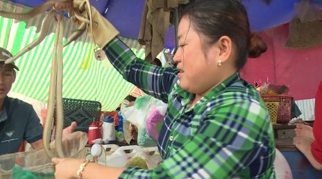 Edible snakes at Vietnam seafood market
