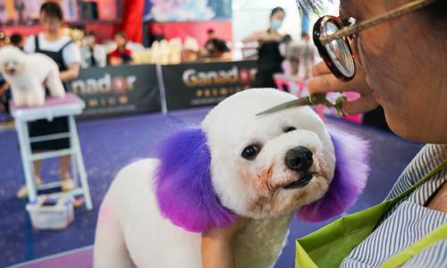 Fluffy dogs and their groomers vie for top prize at HCMC contest