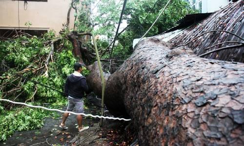 Usagi storm-carved path of destruction across Vietnam's southern coast