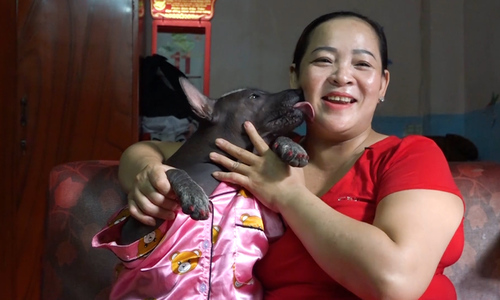 'Ugly' dog gets perfect mom