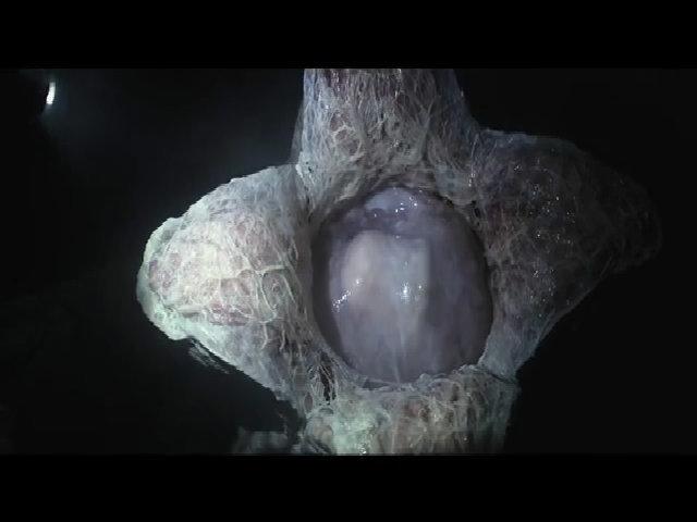 Alien: Covenant Quái vật không gian