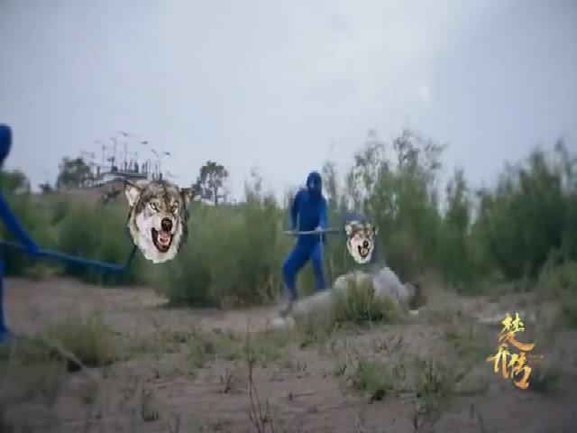 Hậu trường hài hước cảnh Sở Kiều bị sói cắn xé