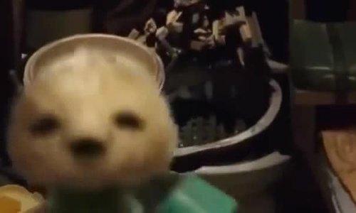 Tình yêu cảm động của Châu Tinh Trì với chú chó cưng - ảnh 2
